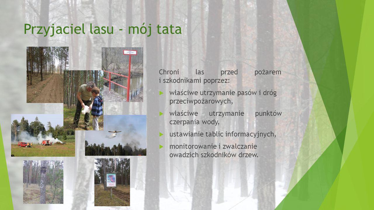Przyjaciel lasu - mój tata Chroni las przed pożarem i szkodnikami poprzez:  właściwe utrzymanie pasów i dróg przeciwpożarowych,  właściwe utrzymanie