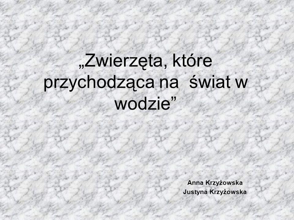 """""""Zwierzęta, które przychodząca na świat w wodzie"""" Anna Krzyżowska Justyna Krzyżowska"""