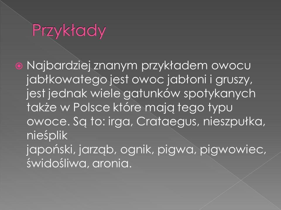  Najbardziej znanym przykładem owocu jabłkowatego jest owoc jabłoni i gruszy, jest jednak wiele gatunków spotykanych także w Polsce które mają tego t