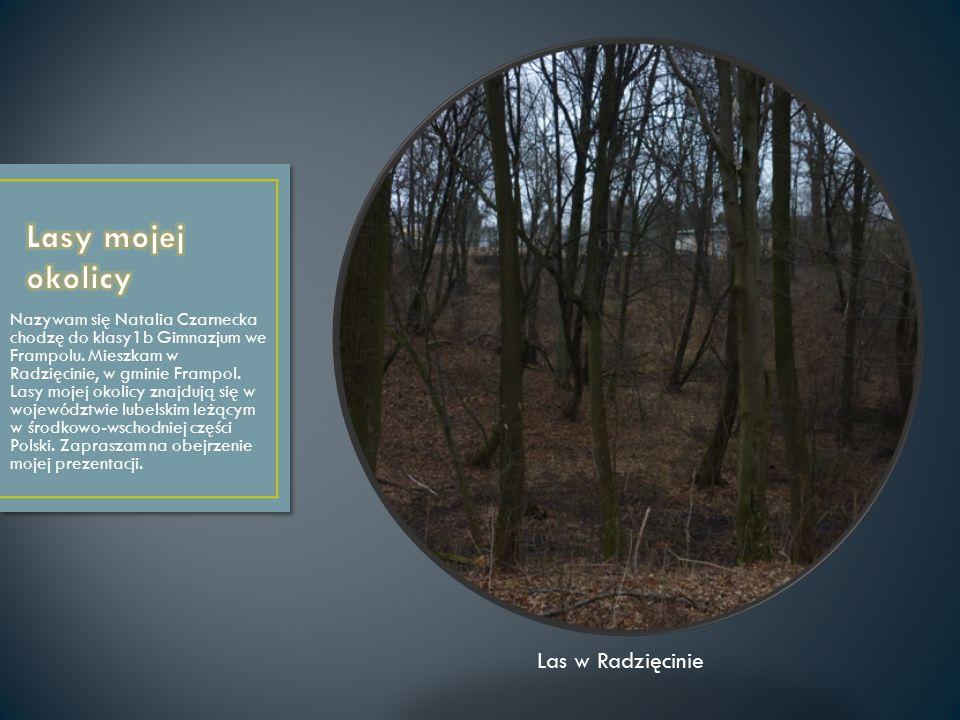 Nazywam się Natalia Czarnecka chodzę do klasy1b Gimnazjum we Frampolu. Mieszkam w Radzięcinie, w gminie Frampol. Lasy mojej okolicy znajdują się w woj