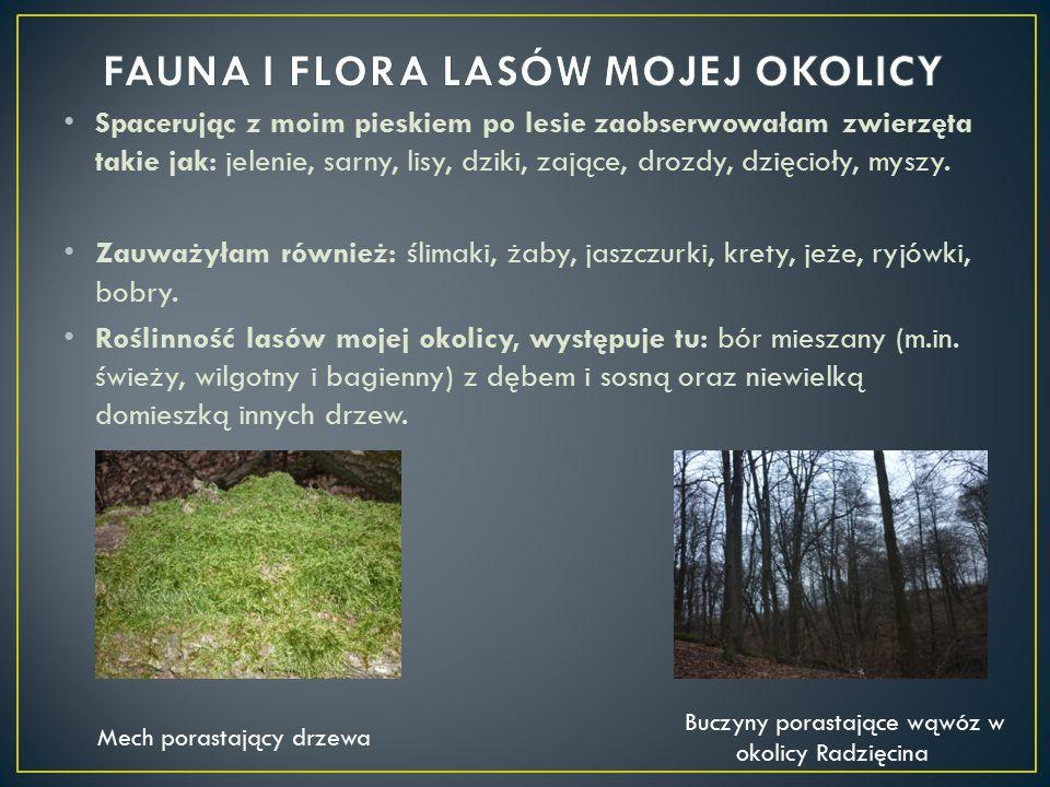 Spacerując z moim pieskiem po lesie zaobserwowałam zwierzęta takie jak: jelenie, sarny, lisy, dziki, zające, drozdy, dzięcioły, myszy. Zauważyłam równ