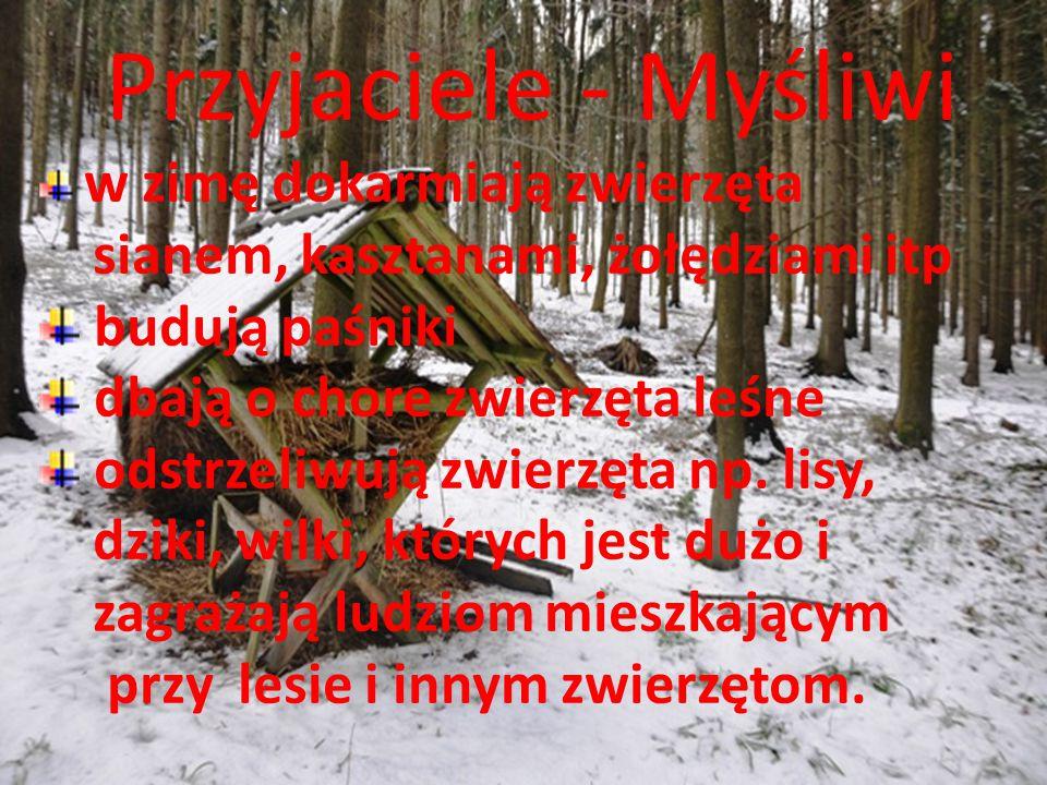 Przyjaciele - Myśliwi w zimę dokarmiają zwierzęta sianem, kasztanami, żołędziami itp budują paśniki dbają o chore zwierzęta leśne odstrzeliwują zwierz