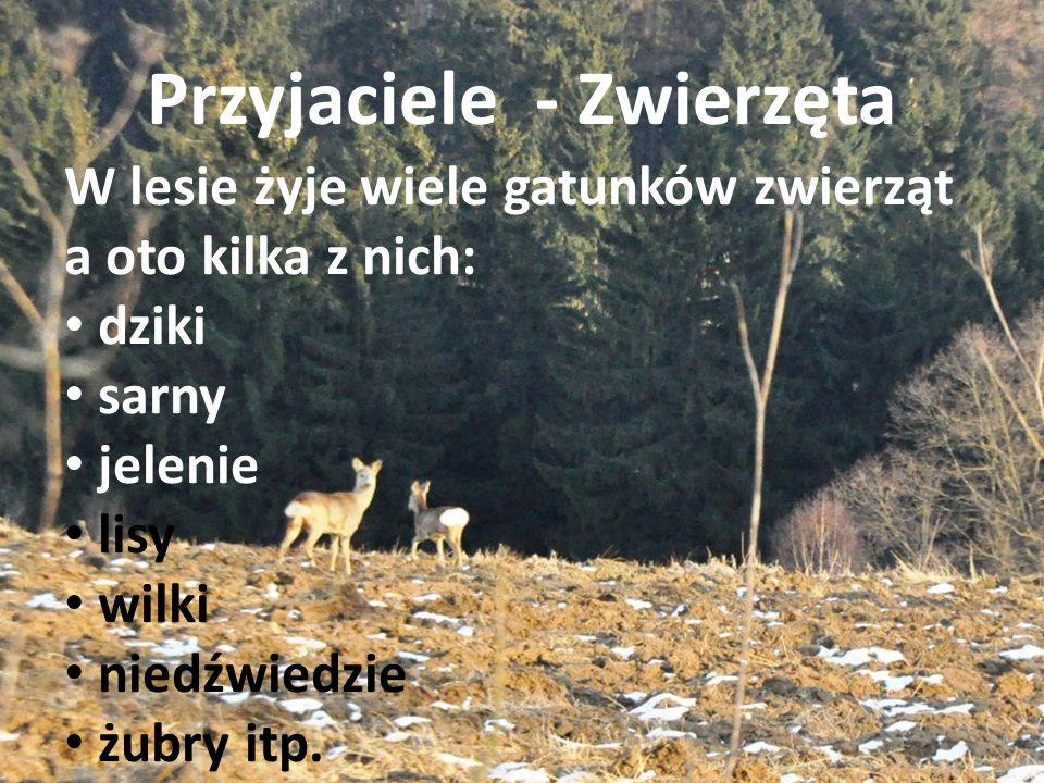 Przyjaciele - Zwierzęta W lesie żyje wiele gatunków zwierząt a oto kilka z nich: dziki sarny jelenie lisy wilki niedźwiedzie żubry itp.