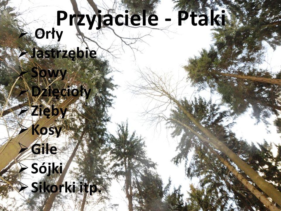 Przyjaciele - Ptaki  Orły  Jastrzębie  Sowy  Dzięcioły  Zięby  Kosy  Gile  Sójki  Sikorki itp.