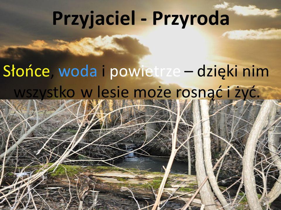 Przyjaciel - Przyroda Słońce, woda i powietrze – dzięki nim wszystko w lesie może rosnąć i żyć.