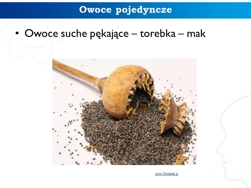 Owoce pojedyncze Owoce suche pękające – torebka – mak www.floranet.p
