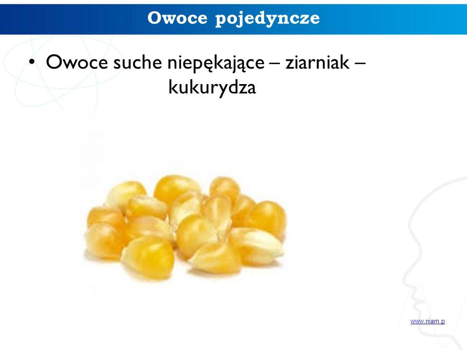 Owoce pojedyncze Owoce suche niepękające – ziarniak – kukurydza www.niam.p