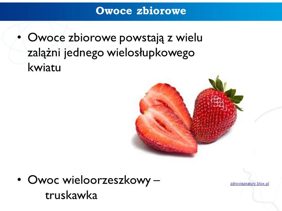 Owoce zbiorowe Owoce zbiorowe powstają z wielu zalążni jednego wielosłupkowego kwiatu Owoc wieloorzeszkowy – truskawka zdrowieznatury.blox.pl