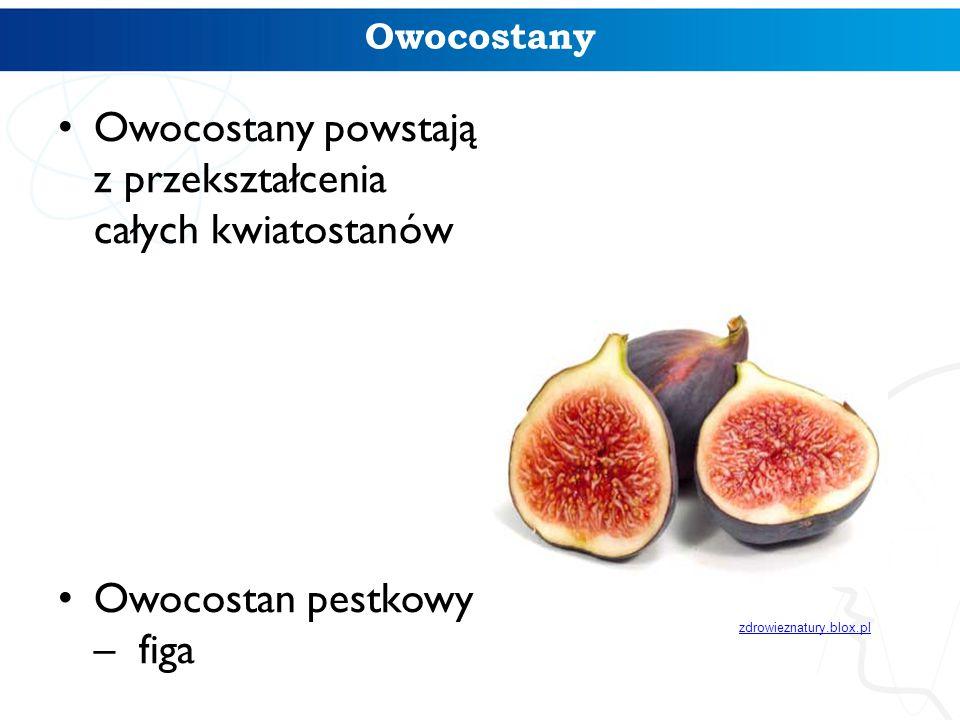 Owocostany Owocostany powstają z przekształcenia całych kwiatostanów Owocostan pestkowy – figa zdrowieznatury.blox.pl