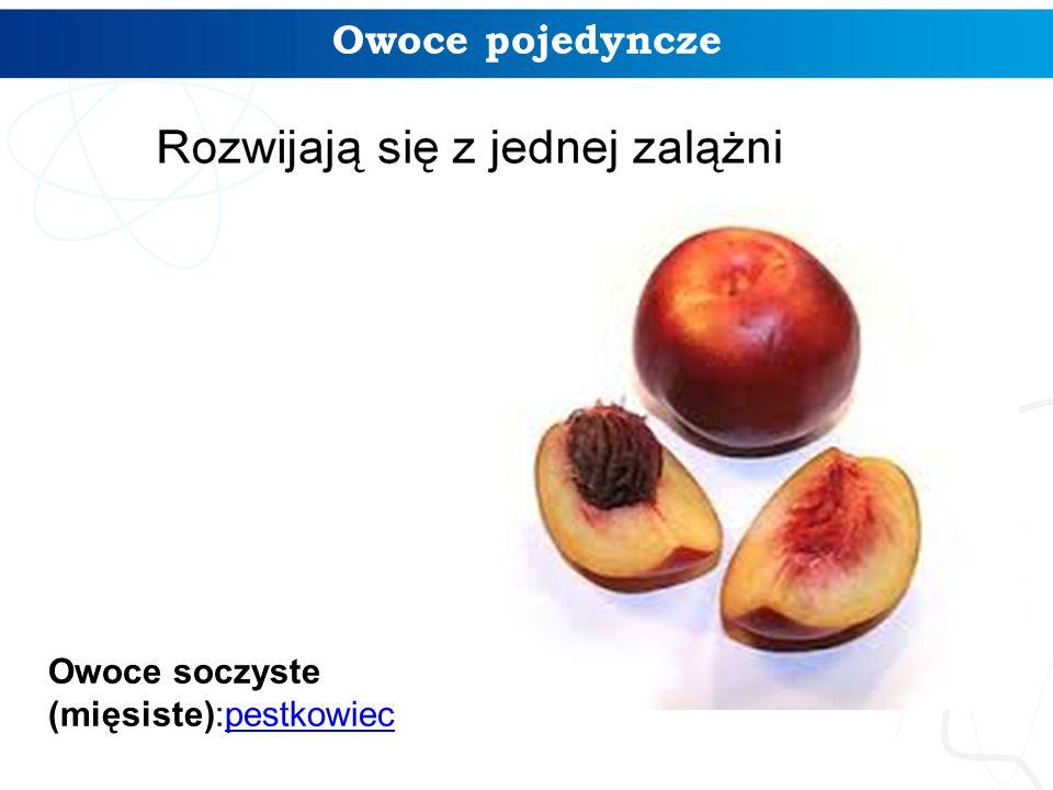 Owoce pojedyncze Owoce soczyste (mięsiste):pestkowiecpestkowiec