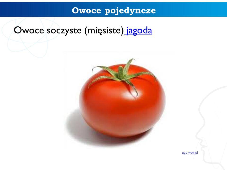Owoce pojedyncze Owoce soczyste (mięsiste) jagoda jagoda agb.waw.pl