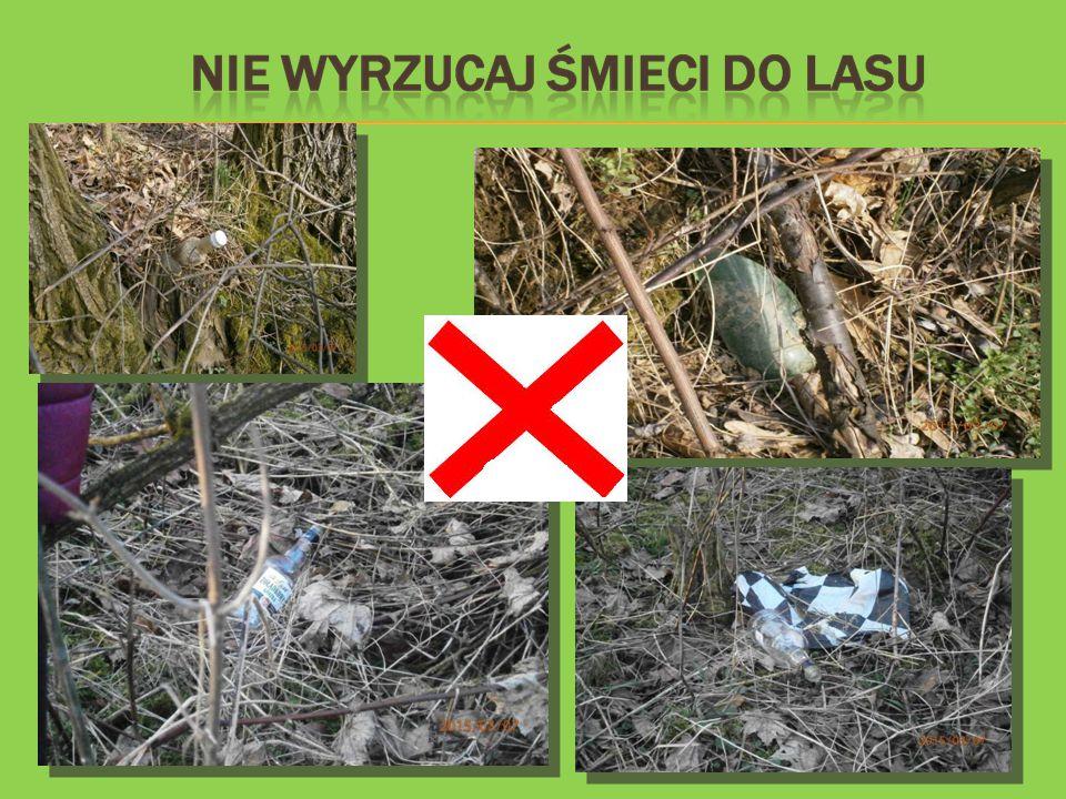 W Polsce przeważają lasy mieszane.