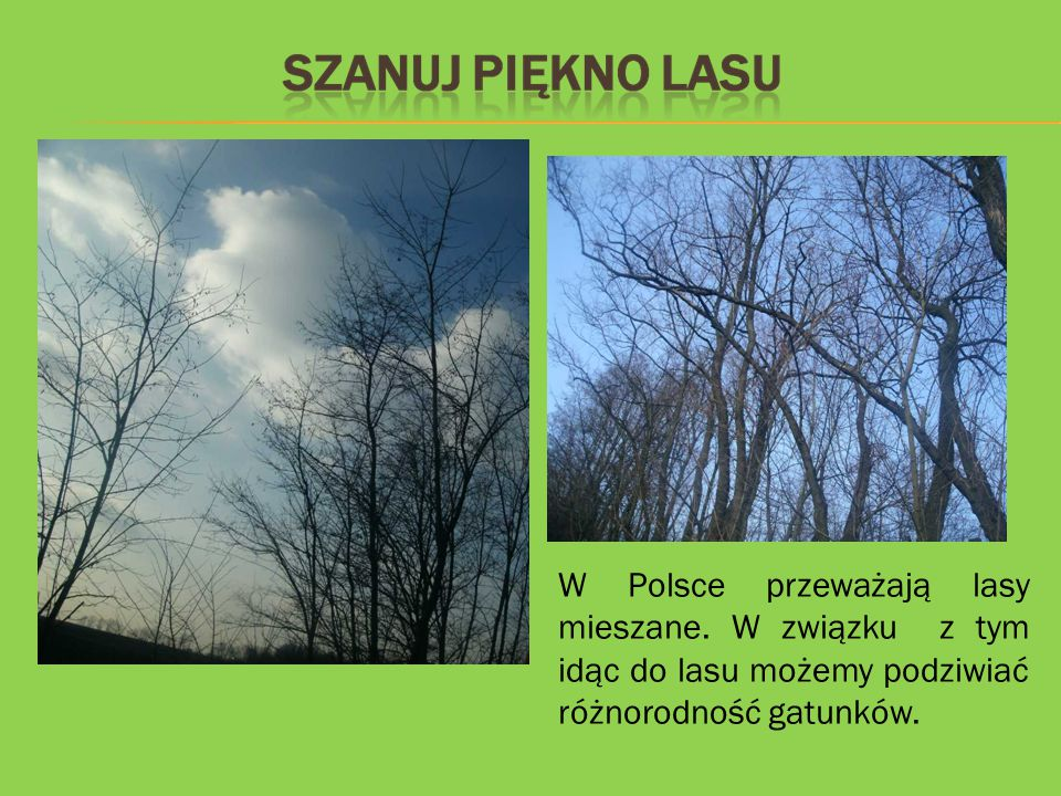 W Polsce przeważają lasy mieszane. W związku z tym idąc do lasu możemy podziwiać różnorodność gatunków.