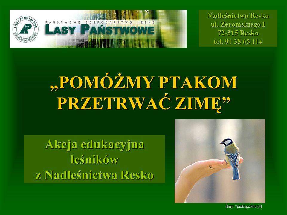 CO SIĘ DZIEJE Z RZUCANYM PRZEZ LUDZI CHLEBEM? [http://www.untitledname.com] [http://bi.gazeta.pl]