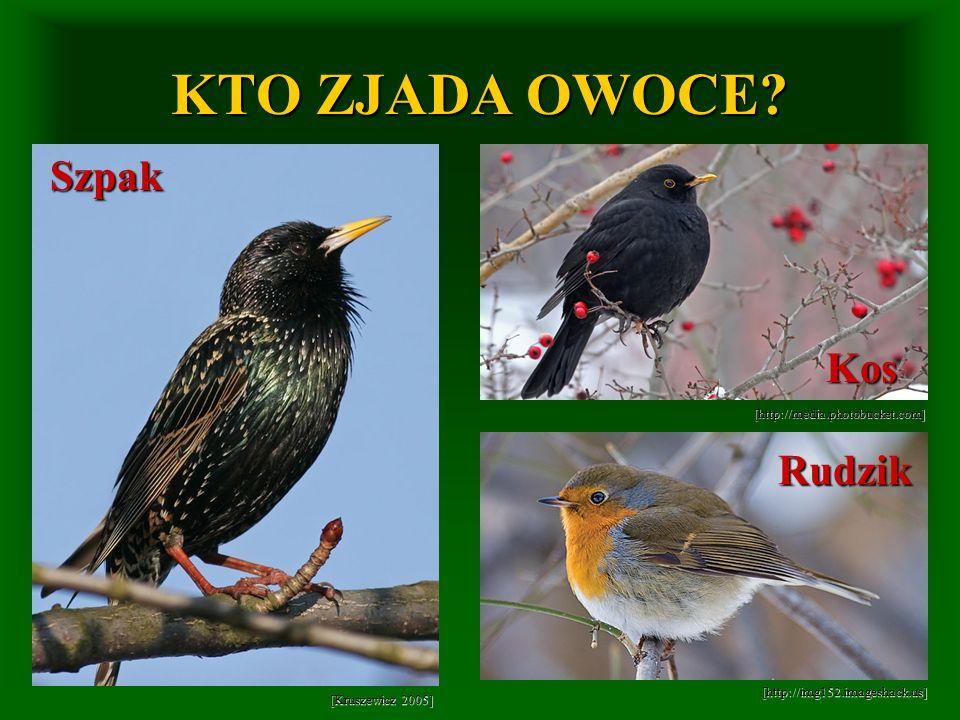 [http://img152.imageshack.us] [http://media.photobucket.com] [Kruszewicz 2005] KTO ZJADA OWOCE? Szpak Kos Rudzik