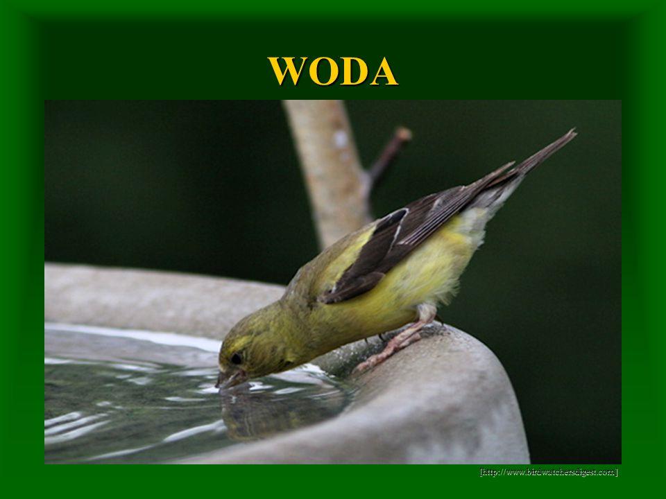 WODA [http://www.birdwatchersdigest.com] [http://www.birdwatchersdigest.com]