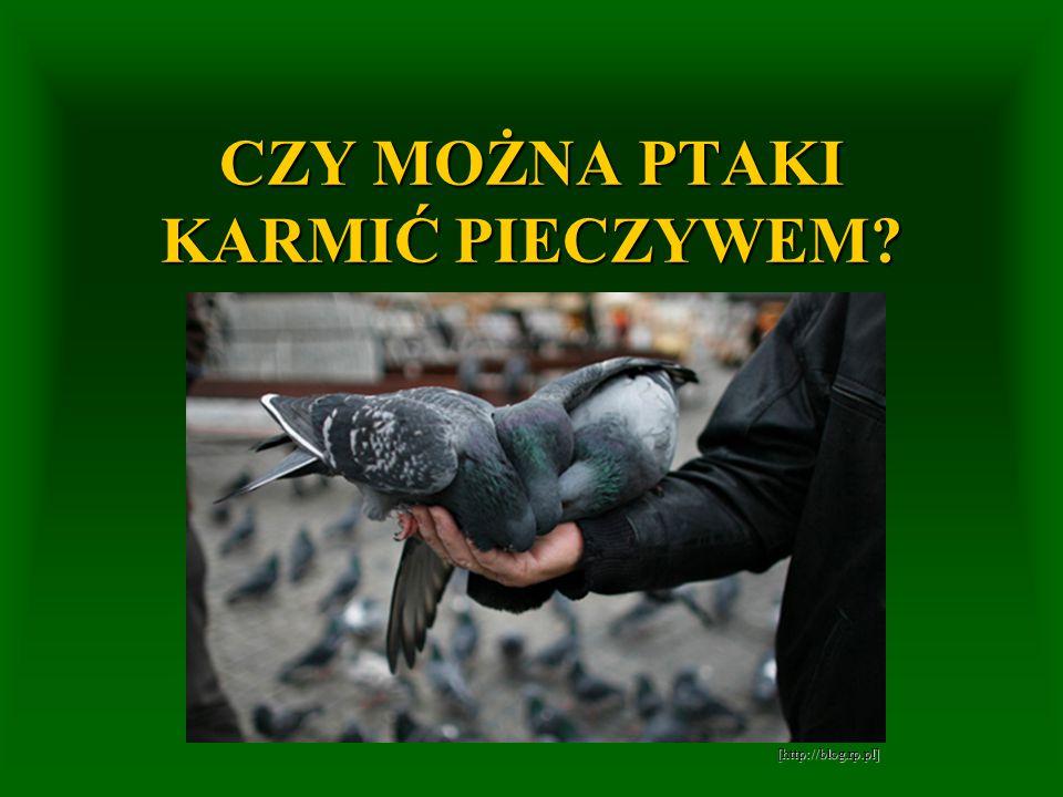 CZY MOŻNA PTAKI KARMIĆ PIECZYWEM? [http://blog.rp.pl] [http://blog.rp.pl]