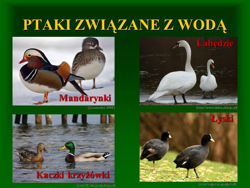 [Kruszewicz 2005] [http://www.zielonalekcja.pl] [http://21wdhy.czuwaj.net] [http://digart.img.digart.pl] PTAKI ZWIĄZANE Z WODĄ Mandarynki Łabędzie Kac