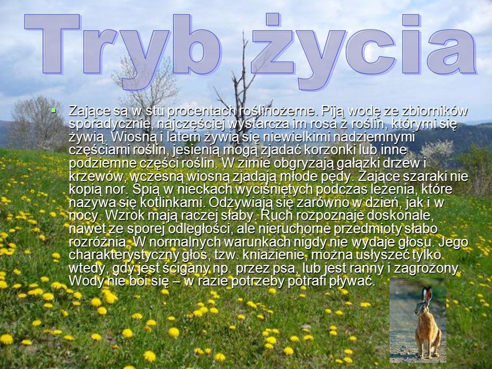  Jest typowo stepowym gatunkiem. Występuje głównie na otwartych terenach upraw rolniczych i łąk, w zagajnikach śródpolnych. W dużych lasach występuje