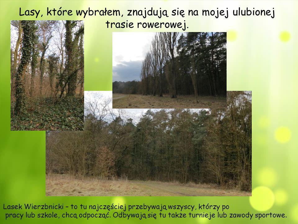 Lasy, które wybrałem, znajdują się na mojej ulubionej trasie rowerowej. Lasek Wierzbnicki – to tu najczęściej przebywają wszyscy, którzy po pracy lub