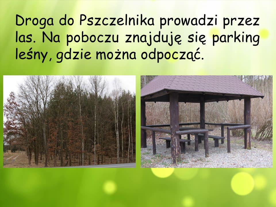 Droga do Pszczelnika prowadzi przez las. Na poboczu znajduję się parking leśny, gdzie można odpocząć.