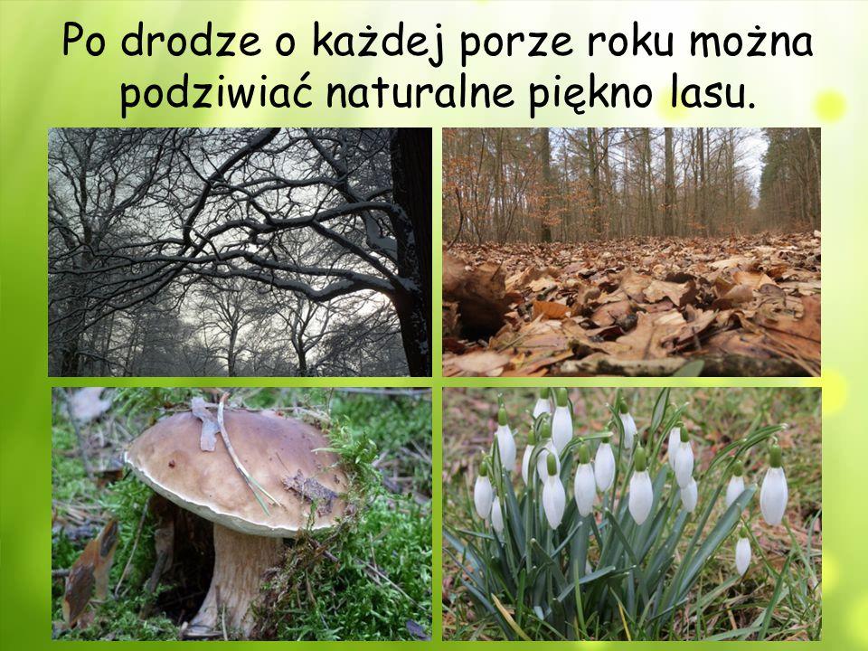 Po drodze o każdej porze roku można podziwiać naturalne piękno lasu.