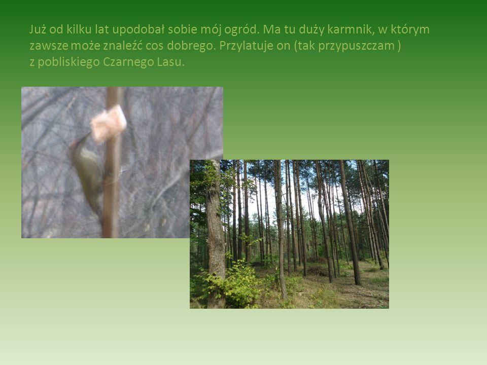 W pobliżu miejsca mojego zamieszkania znajduje się dużo terenów leśnych i podmokłych, na których zamieszkuje całe mnóstwo zwierząt i ptaków. Jednym z
