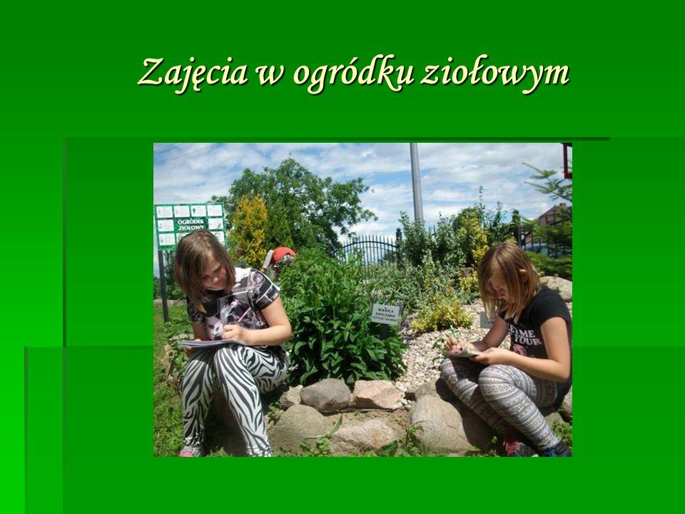 Zajęcia w ogródku ziołowym Zajęcia w ogródku ziołowym