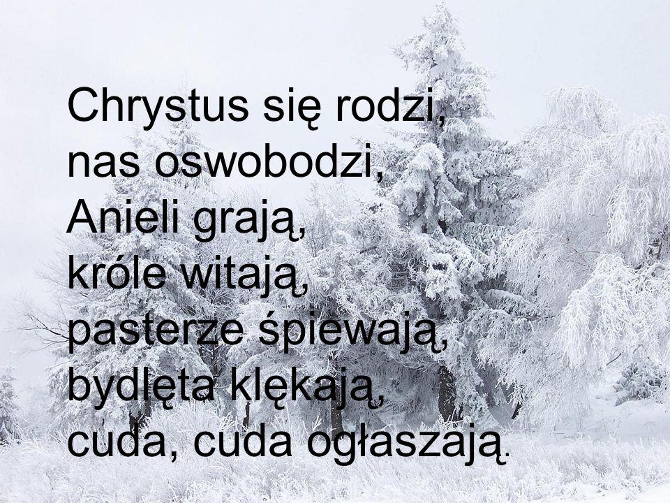 Chrystus się rodzi, nas oswobodzi, Anieli grają, króle witają, pasterze śpiewają, bydlęta klękają, cuda, cuda ogłaszają.
