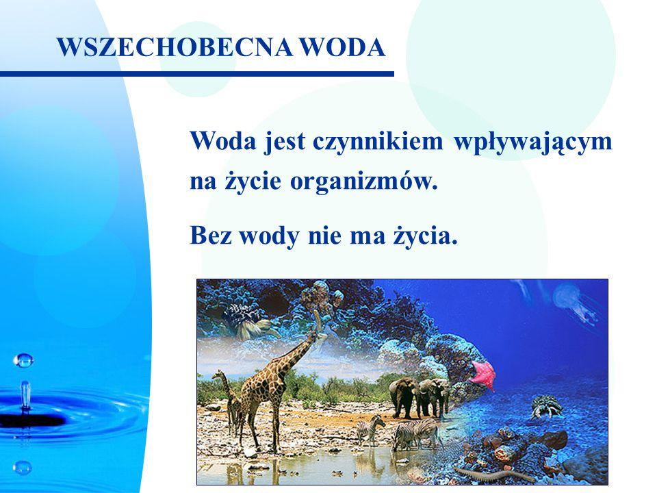 WSZECHOBECNA WODA Woda jest czynnikiem wpływającym na życie organizmów. Bez wody nie ma życia.