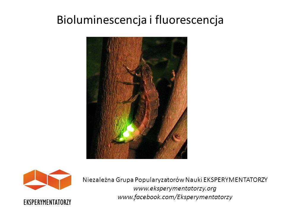 Niezależna Grupa Popularyzatorów Nauki EKSPERYMENTATORZY www.eksperymentatorzy.org www.facebook.com/Eksperymentatorzy Bioluminescencja i fluorescencja