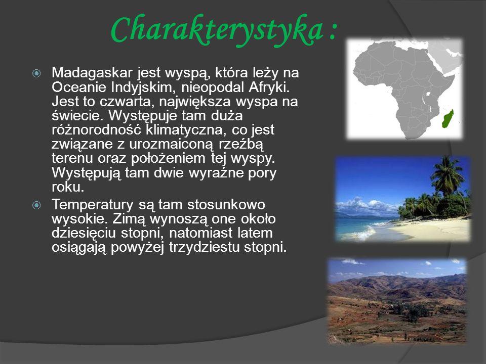 Charakterystyka :  Madagaskar jest wyspą, która leży na Oceanie Indyjskim, nieopodal Afryki. Jest to czwarta, największa wyspa na świecie. Występuje