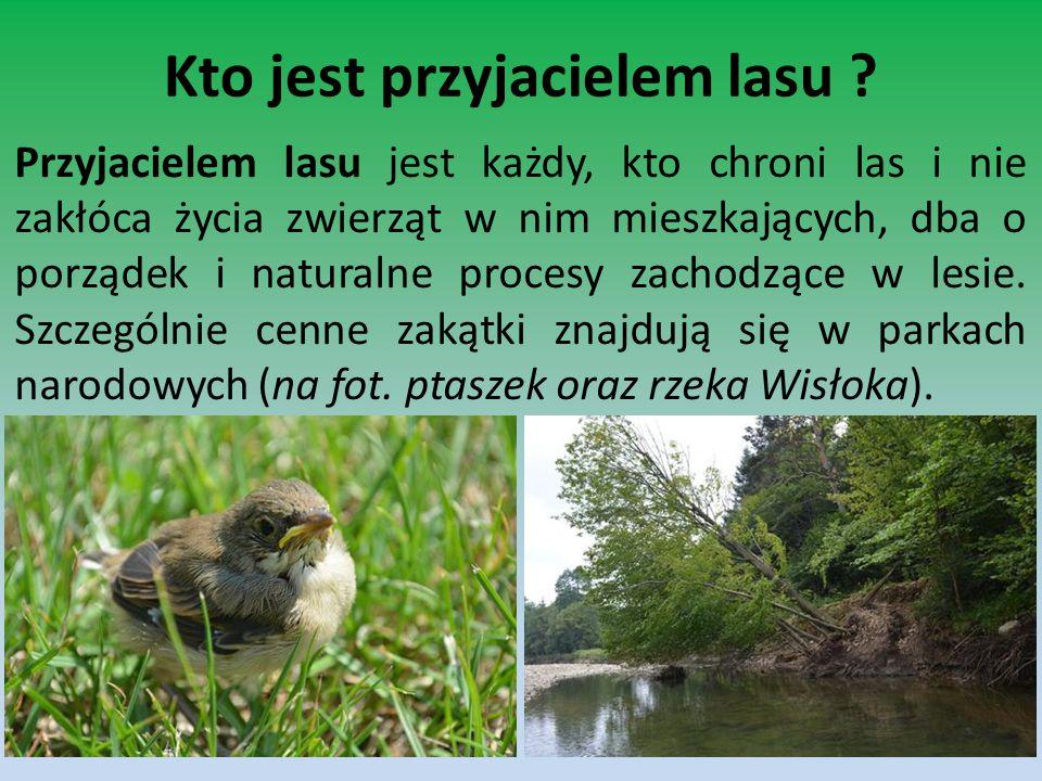 Kto jest przyjacielem lasu ? Przyjacielem lasu jest każdy, kto chroni las i nie zakłóca życia zwierząt w nim mieszkających, dba o porządek i naturalne