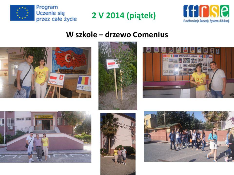 W szkole – drzewo Comenius 2 V 2014 (piątek)