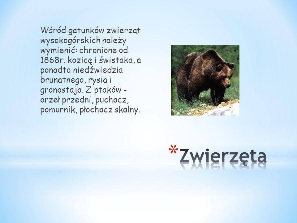 Wśród gatunków zwierząt wysokogórskich należy wymienić: chronione od 1868r. kozicę i świstaka, a ponadto niedźwiedzia brunatnego, rysia i gronostaja.