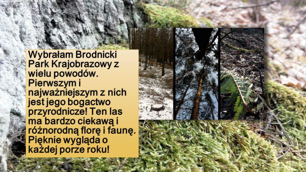 Wybrałam Brodnicki Park Krajobrazowy z wielu powodów. Pierwszym i najważniejszym z nich jest jego bogactwo przyrodnicze! Ten las ma bardzo ciekawą i r
