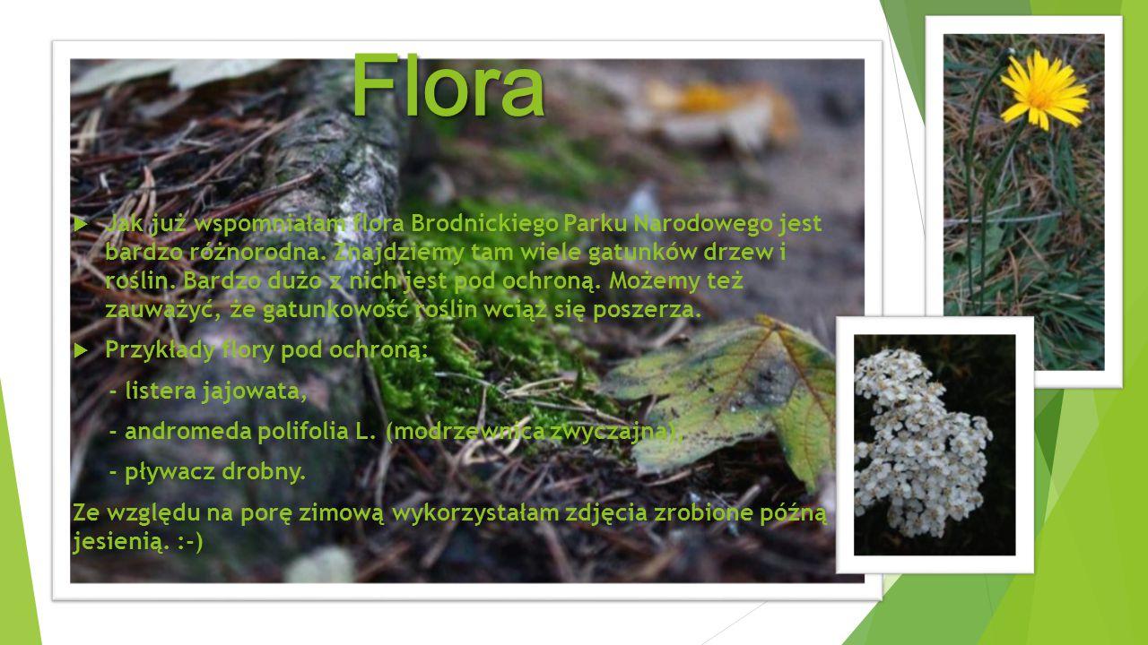 Flora  Jak już wspomniałam flora Brodnickiego Parku Narodowego jest bardzo różnorodna. Znajdziemy tam wiele gatunków drzew i roślin. Bardzo dużo z ni