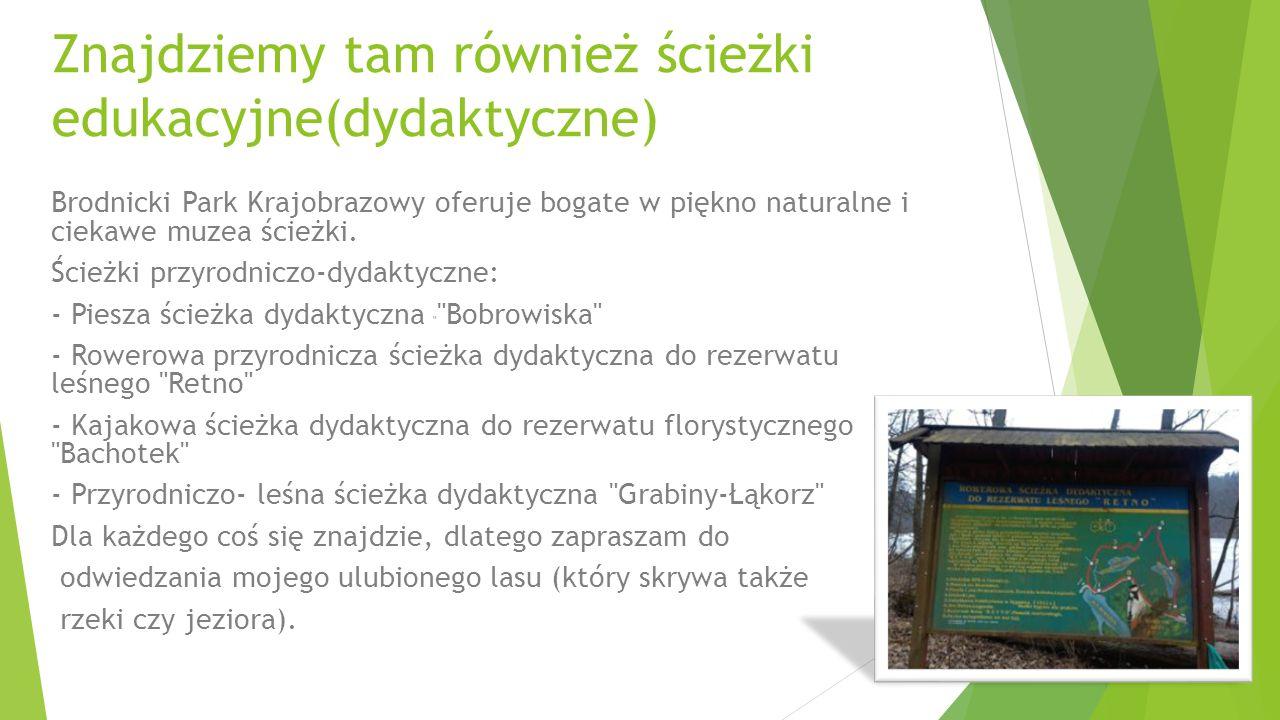 Znajdziemy tam również ścieżki edukacyjne(dydaktyczne) Brodnicki Park Krajobrazowy oferuje bogate w piękno naturalne i ciekawe muzea ścieżki. Ścieżki