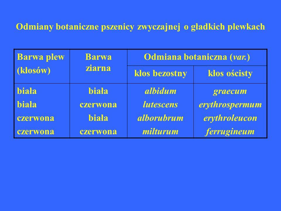Odmiany botaniczne pszenicy zwyczajnej o gładkich plewkach Barwa plew (kłosów) Barwa ziarna Odmiana botaniczna (var.) kłos bezostnykłos ościsty biała