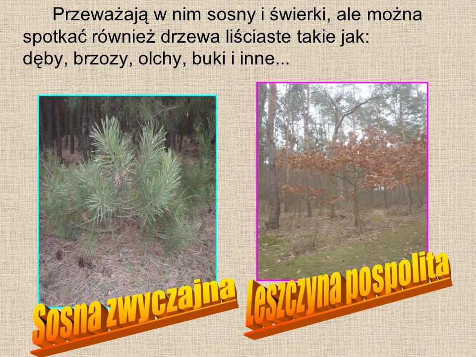 Przeważają w nim sosny i świerki, ale można spotkać również drzewa liściaste takie jak: dęby, brzozy, olchy, buki i inne...