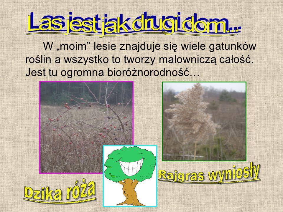 """W """"moim lesie znajduje się wiele gatunków roślin a wszystko to tworzy malowniczą całość."""