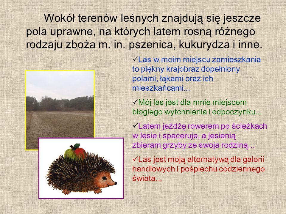 Wokół terenów leśnych znajdują się jeszcze pola uprawne, na których latem rosną różnego rodzaju zboża m.