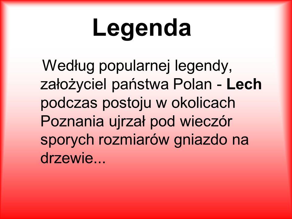 Legenda Według popularnej legendy, założyciel państwa Polan - Lech podczas postoju w okolicach Poznania ujrzał pod wieczór sporych rozmiarów gniazdo na drzewie...