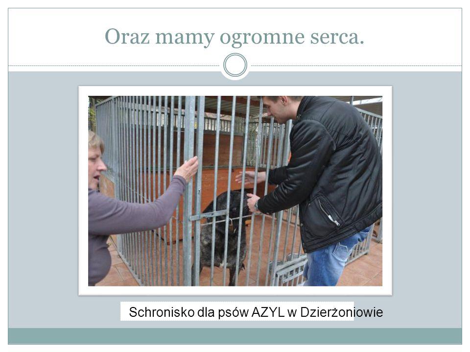 Oraz mamy ogromne serca. Schronisko dla psów AZYL w Dzierżoniowie