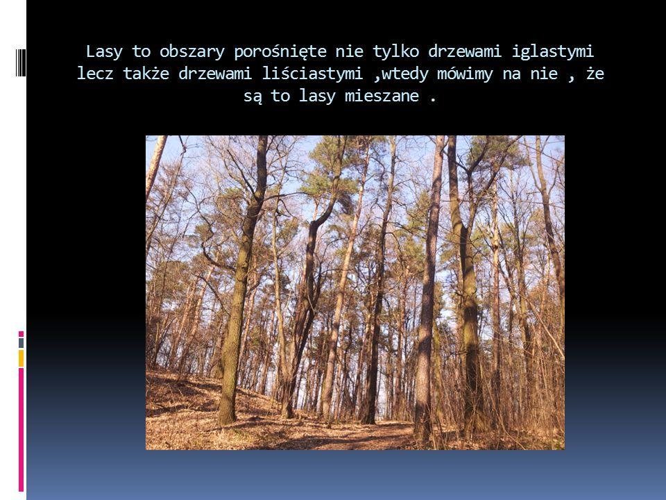 Lasy to obszary porośnięte nie tylko drzewami iglastymi lecz także drzewami liściastymi,wtedy mówimy na nie, że są to lasy mieszane.