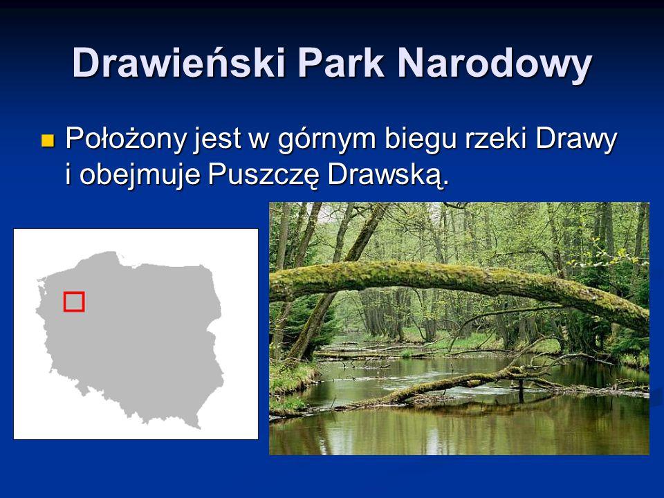 Drawieński Park Narodowy Położony jest w górnym biegu rzeki Drawy i obejmuje Puszczę Drawską. Położony jest w górnym biegu rzeki Drawy i obejmuje Pusz