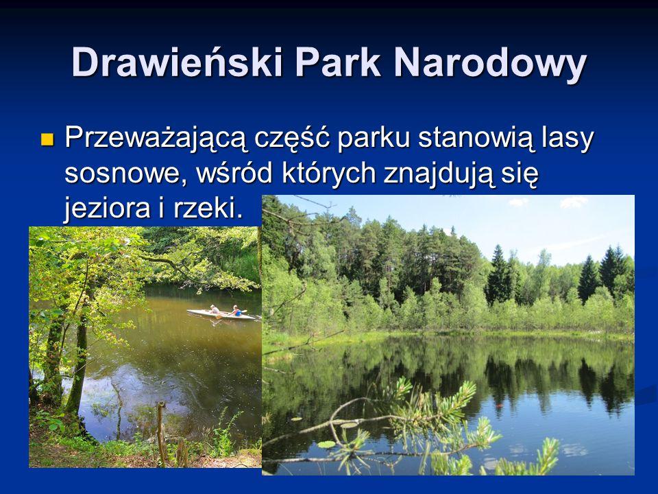 Drawieński Park Narodowy Przeważającą część parku stanowią lasy sosnowe, wśród których znajdują się jeziora i rzeki. Przeważającą część parku stanowią