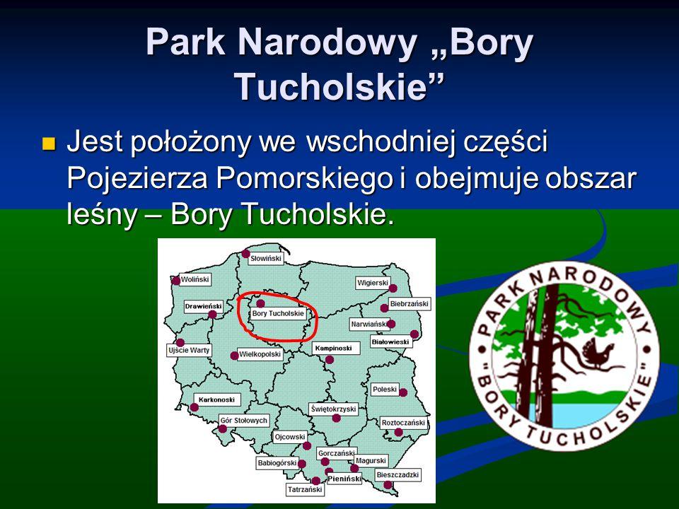 """Park Narodowy """"Bory Tucholskie"""" Jest położony we wschodniej części Pojezierza Pomorskiego i obejmuje obszar leśny – Bory Tucholskie. Jest położony we"""