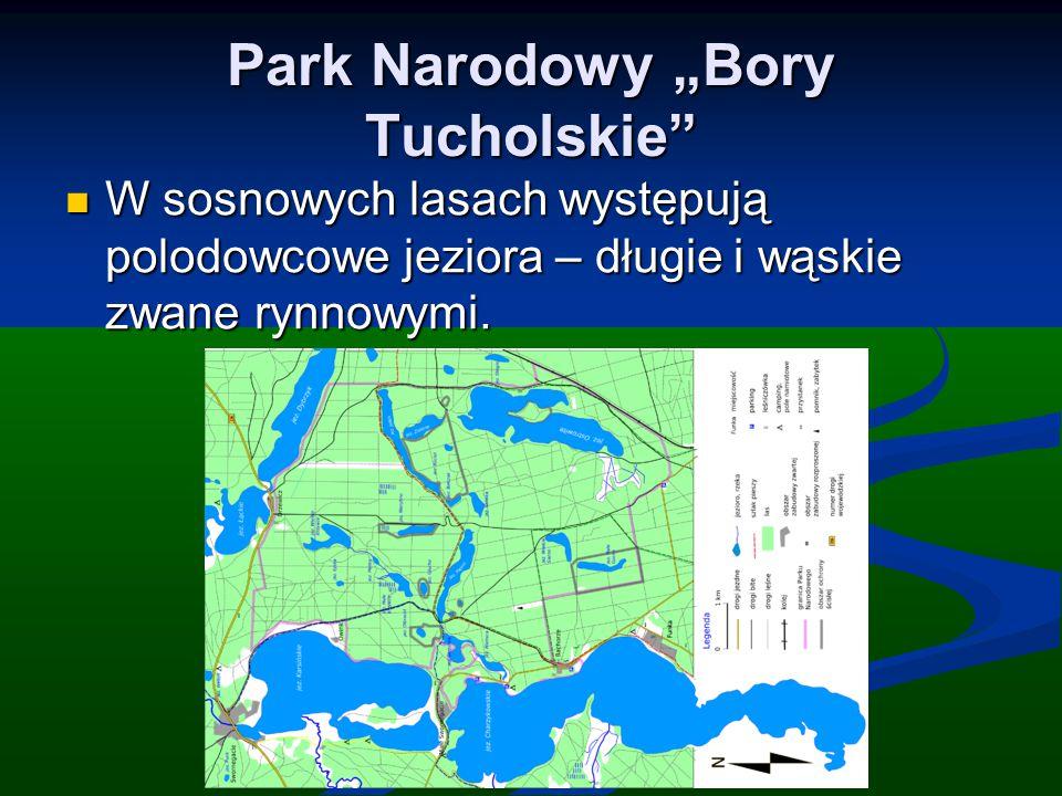 """Park Narodowy """"Bory Tucholskie"""" W sosnowych lasach występują polodowcowe jeziora – długie i wąskie zwane rynnowymi. W sosnowych lasach występują polod"""