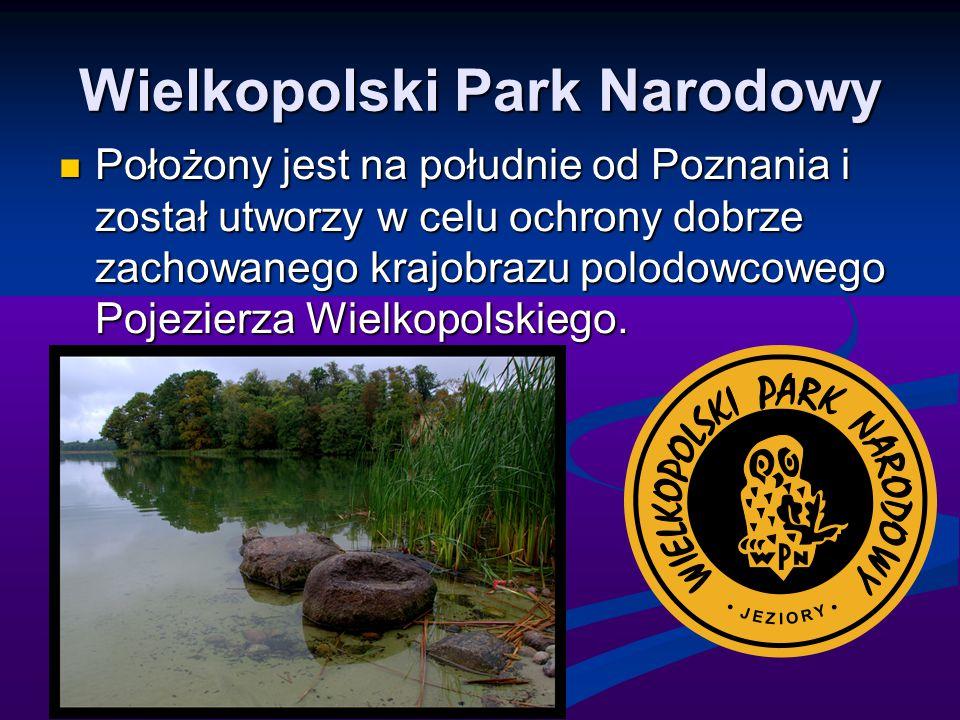 Wielkopolski Park Narodowy Położony jest na południe od Poznania i został utworzy w celu ochrony dobrze zachowanego krajobrazu polodowcowego Pojezierz